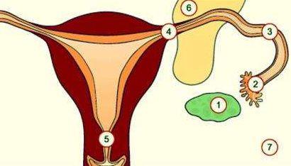 女性应该怎么保养自己的子宫