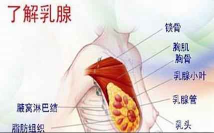 淮安治乳腺囊肿医院 你是易患人群吗?